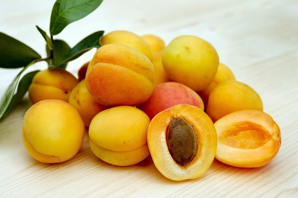 biji aprikot