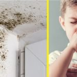Kulat disiling rumah punca batuk dan selesema yang lama