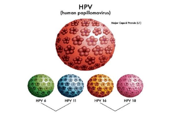 virus HPV