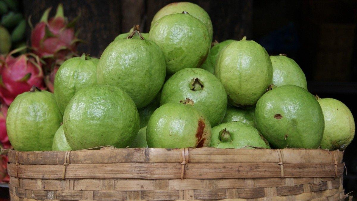 khasiat buah jambu batu
