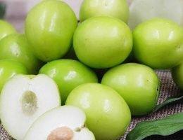 khasiat buah bidara