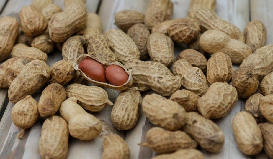 khasiat kacang tanah